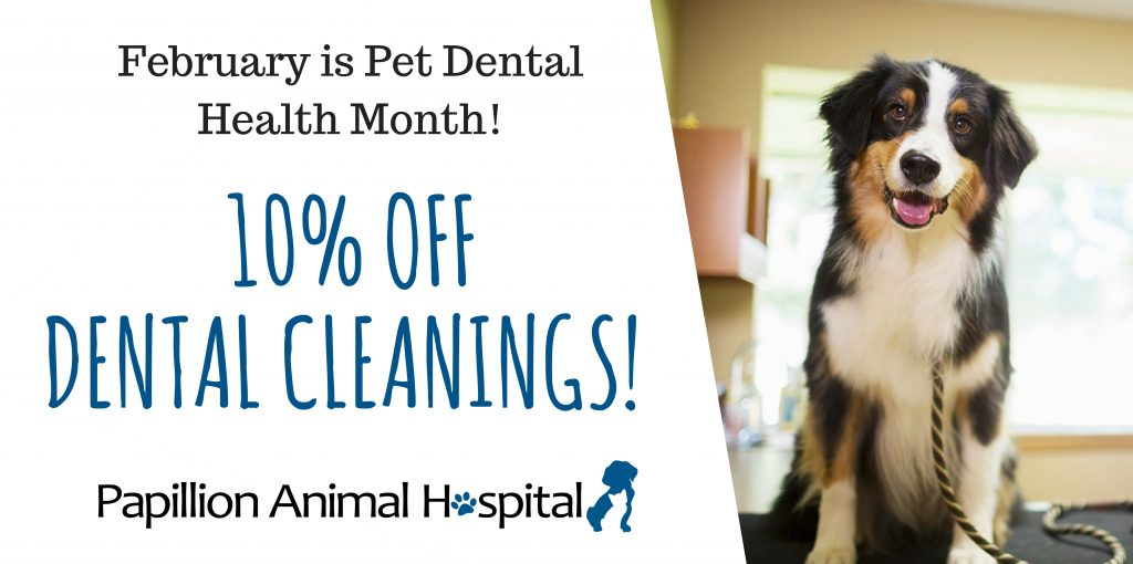 10% off cleanings