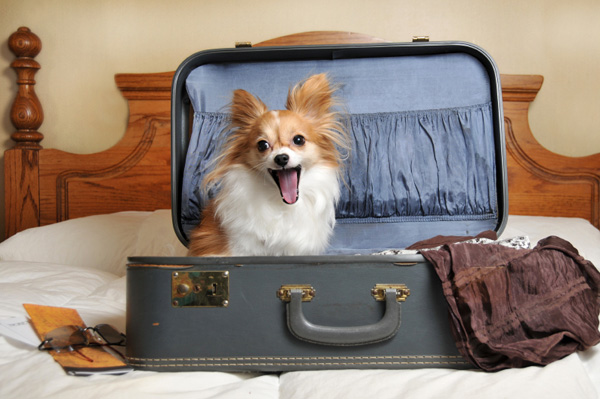 happy dog in suite case ready for vacation