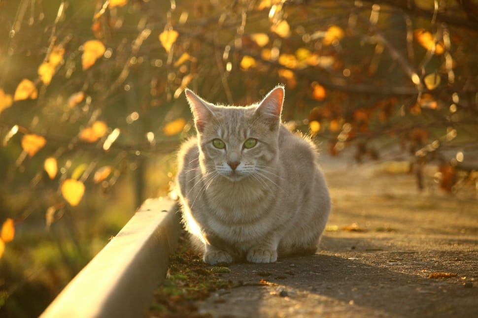 Fall evening light foliage cat sitting