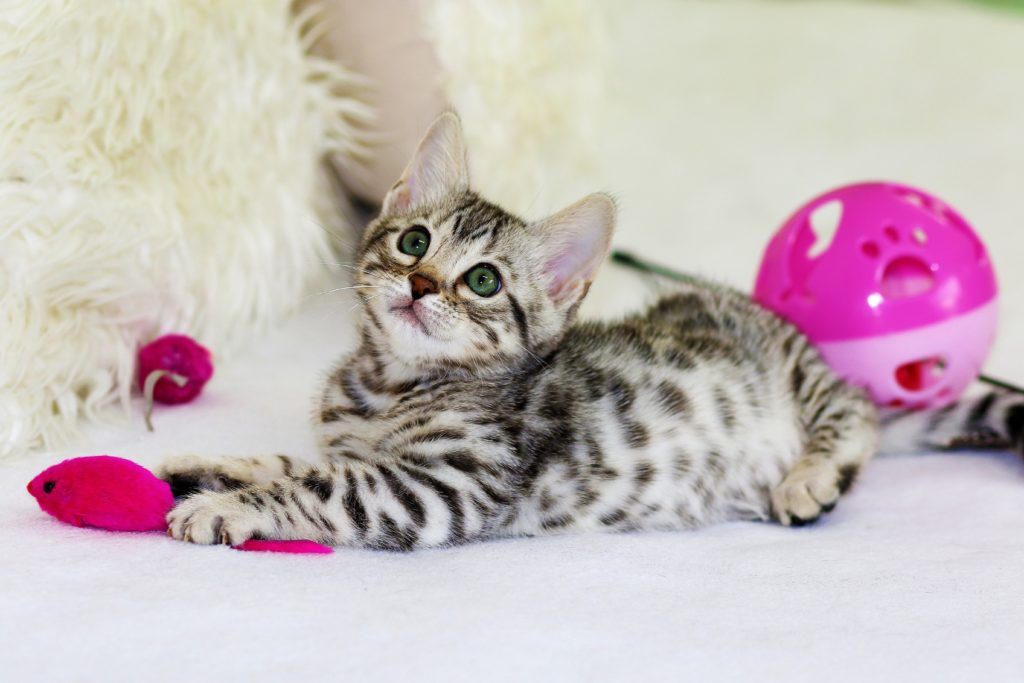 Kitten playing with Valentines toys